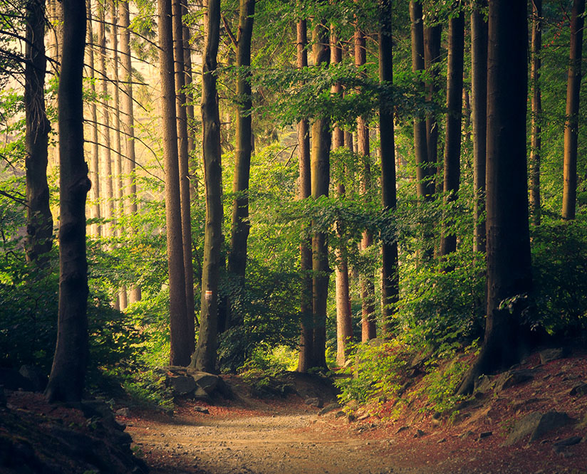 Site Web Lille et la protection de l'environnement - protégeons nos forêts !